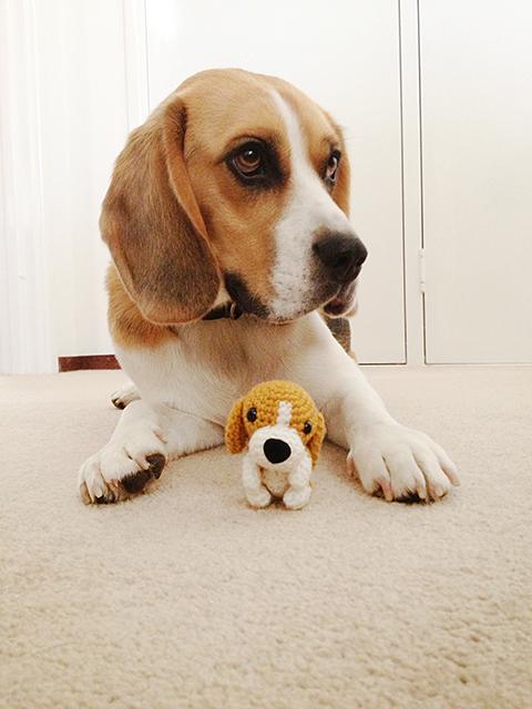 Koko & Amigurumi Beagle